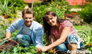 Primo Insediamento Giovani in Agricoltura Misura 112